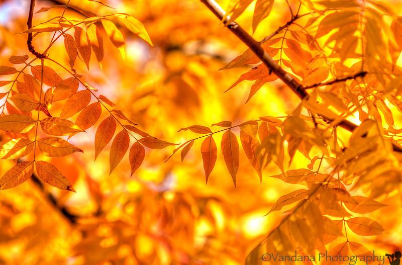 November 13, 2013 - the golden necklace