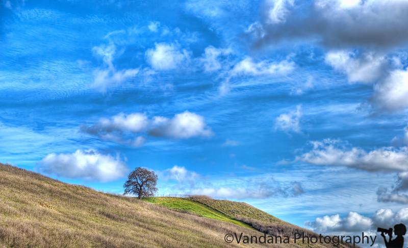 January 29, 2013 - the lone tree
