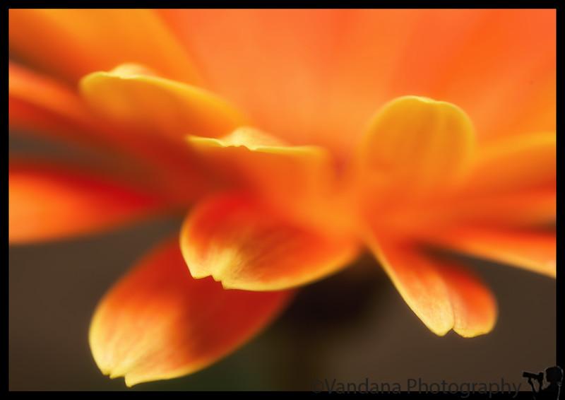 January 25, 2013 - Petals