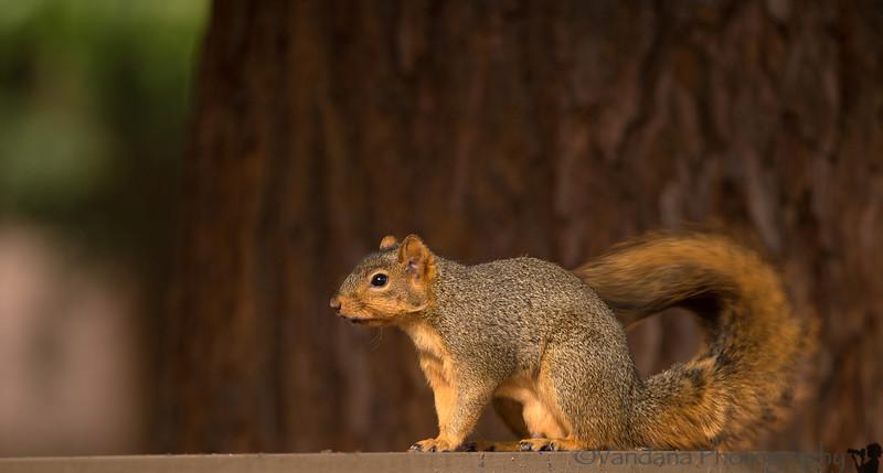 November 5, 2013 - Squirrel in the backyard