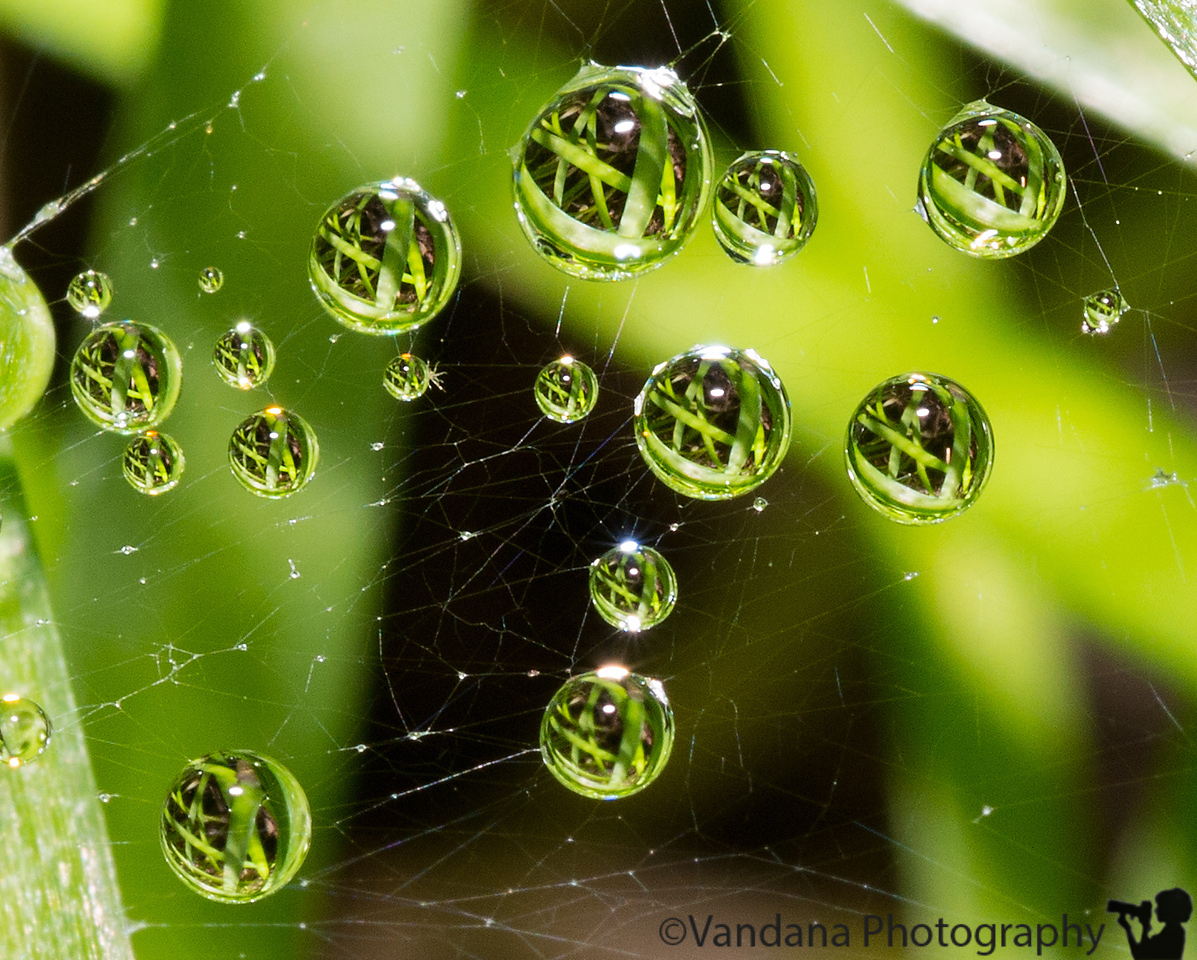 June 28, 2013 - Some more drops, and refractions