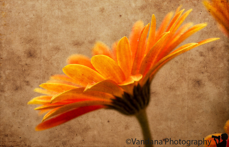 January 23, 2013 - flower power