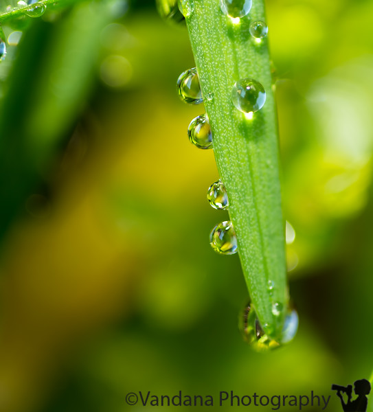 April 29, 2013 - Playing with drops