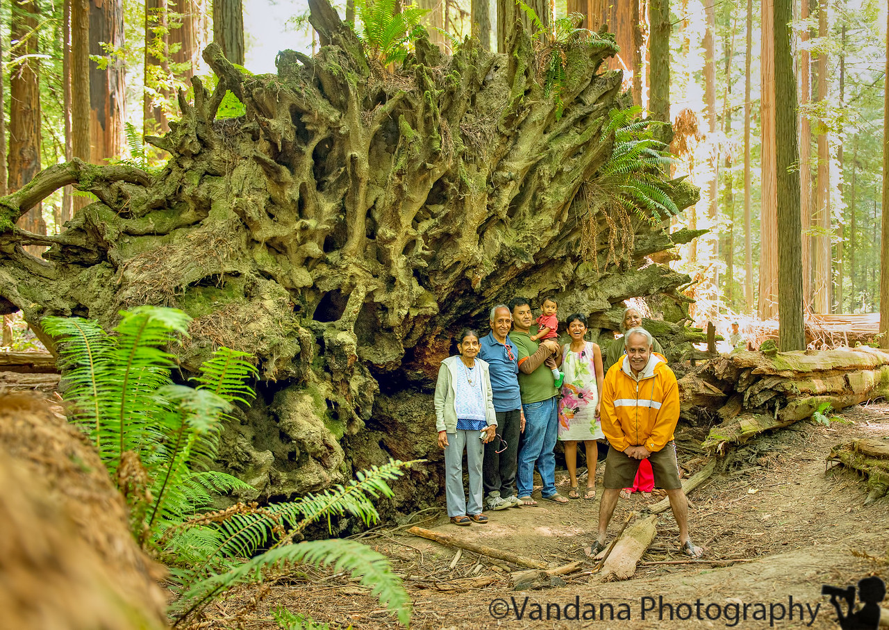 July 10, 2013 - Under a redwood tree's roots - photo taken with self-timer, at Redwood National Park, over this past weekend