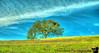 April 30, 2013 - One tree hill