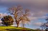 January 30, 2013 - the artsy tree