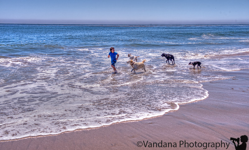 May 24, 2013 - a boy and his dogs..