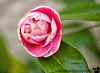 February 5, 2013 - a flower in the backyard
