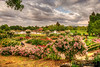 May 18, 2013 - the beautiful Heather Farm Gardens, Walnut Creek