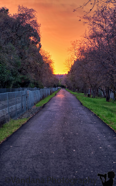 December 4, 2013 - Along the Iron Horse Trail, Walnut Creek