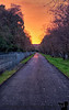 December 4, 2013 - Along the Iron Horse Trail, Walnut Creek