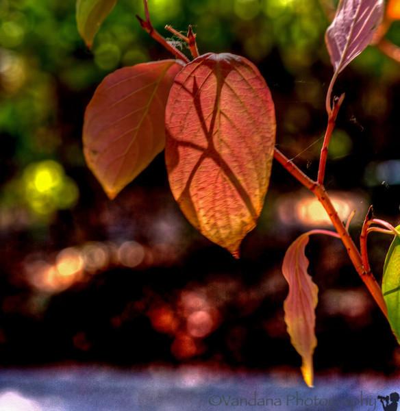 October 22, 2013 - the beginnings of fall