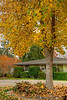 November 18, 2013 - a house in fall