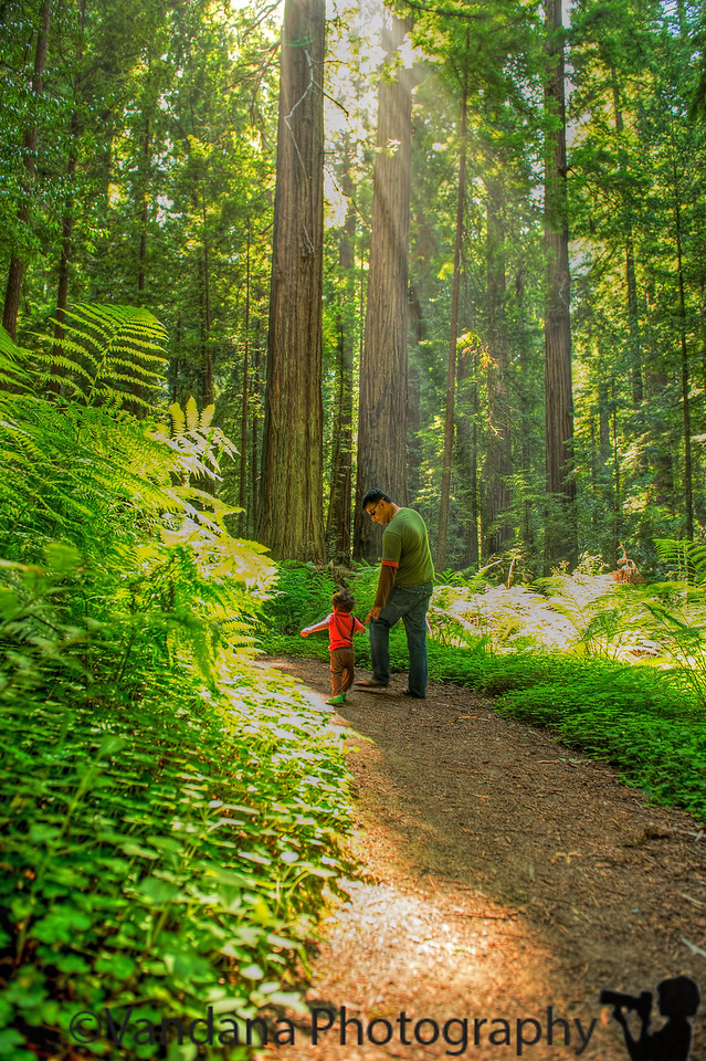 July 6, 2013 - Walking in the woods, Avenue of the Gaints, Humboldt Redwoods State Park