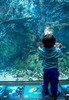 December 27, 2013 - Enjoying the aquarium