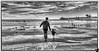 December 11, 2013 - Run to the beach !