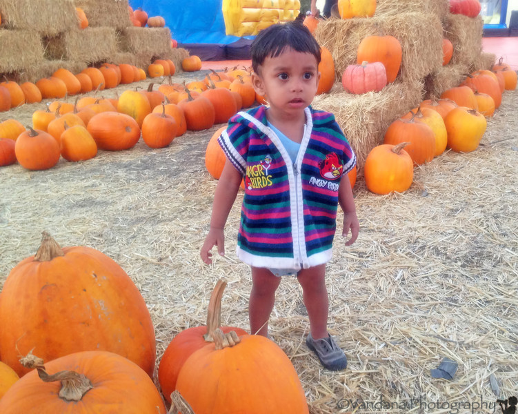 October 13, 2013 - Arjun explores a pumpkin patch - taken with a iphone