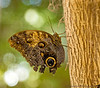 August 30, 2013 - another butterfly graces our world