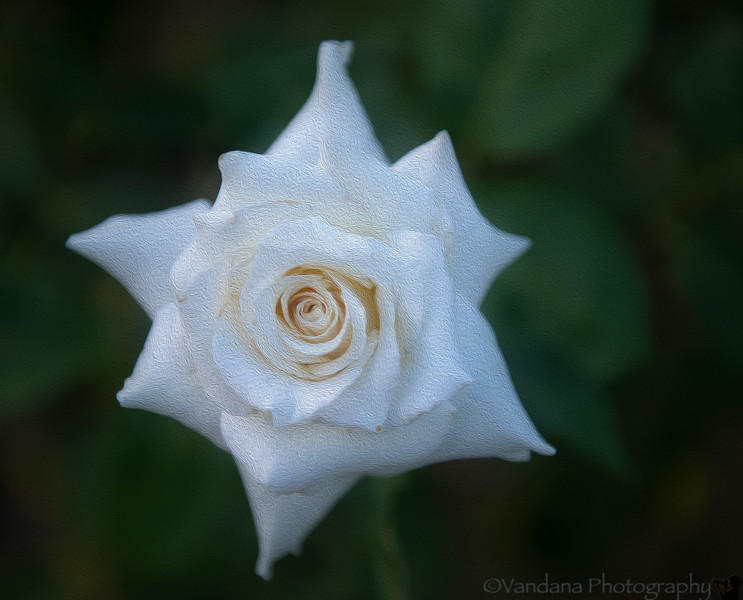 August 7, 2014 - White beauty