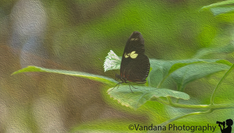 September 7, 2014 - a butterfly, and some oil paint effects