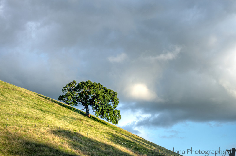 March 28, 2014 - Clouds over the lone tree