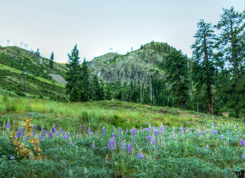 July 5, 2014 - A walk up the mountains
