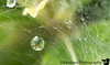 October 1, 2014 - Raindrop on a web