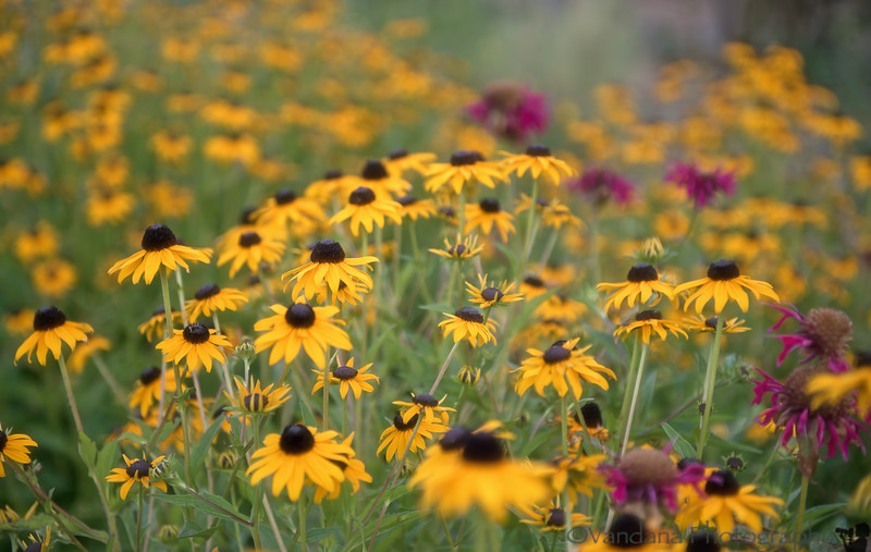 July 25, 2014 - flowers at Heather Farm Gardens