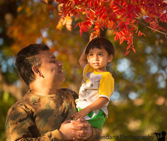 November 3, 2014 - Red leaves
