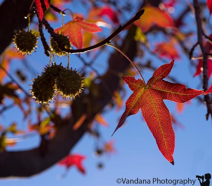 October 26, 2014 - Fall leaf