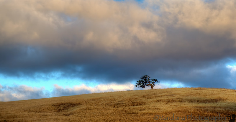 July 27, 2014 - lone tree in sunset