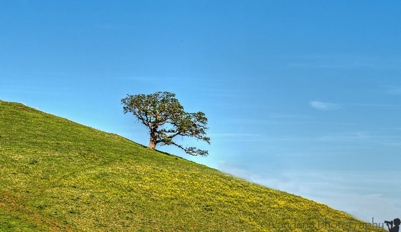 March 21, 2014 - the lone tree