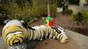 December 16, 2014 - Climbing the caterpillar mountain at Oakland Zoo - for video, click on smugmug link and play.