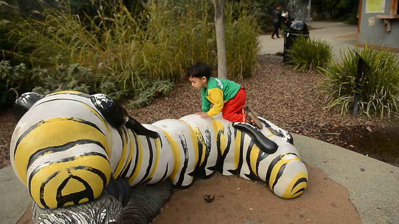 December 16, 2014 - Climbing the caterpillar mountain at Oakland Zoo - for video, click on smugmug link and play.