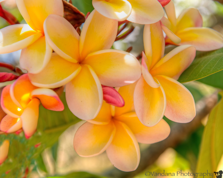 May 9, 2014 - Day at sea. photos from the land.. the beautiful, and fragrant Plumeria