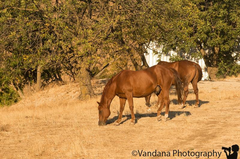 September 16, 2014 - the ranch