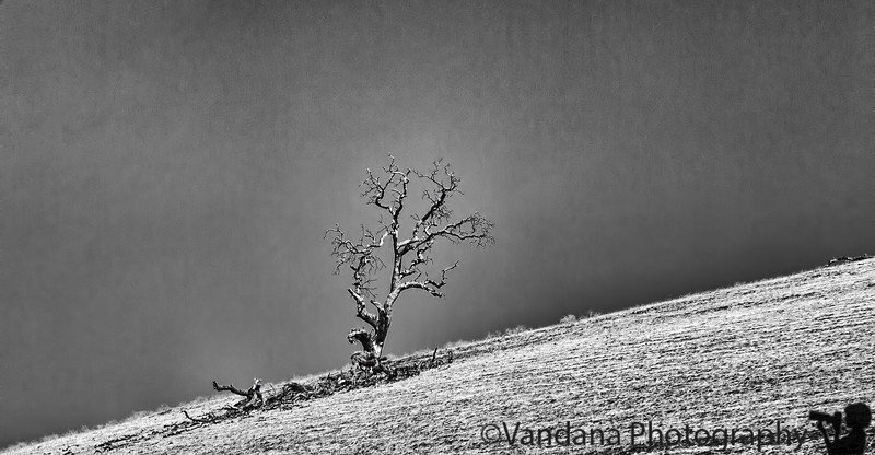 October 21 2014 - Stark <br /> <br /> 3rd post in the 5 day black and white challenge. <br /> <br /> I now nominate Chandru Jain for this challenge. I'm sure he will come up with some wonderful images.