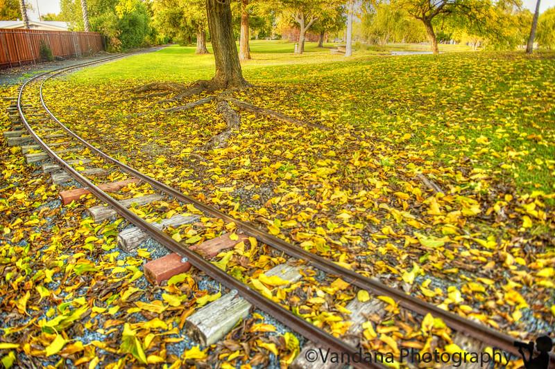 December 11, 2014 - the choo-choo train tracks