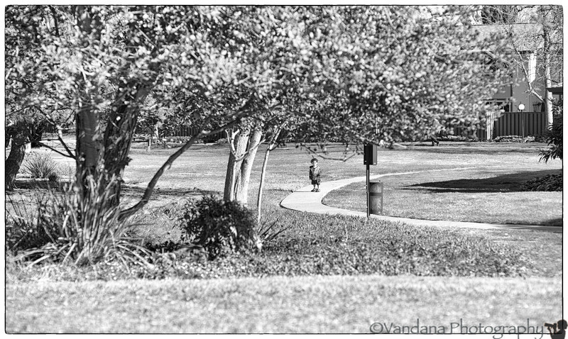 March 3, 2014 - Independent ! running off after a dog, all alone !