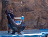 November 11, 2014 - a sea-lion show at Mazatlan aquarium<br /> <br /> and highlight of the show - Arjun got kissed by the sea-lion !