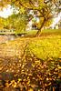December 5, 2014 - the late fall in California
