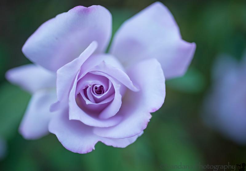 August 21, 2014 - Purple in bloom