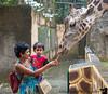 November 13, 2014 - Feeding the giraffes, Puerta Vallarta<br /> <br /> day at sea