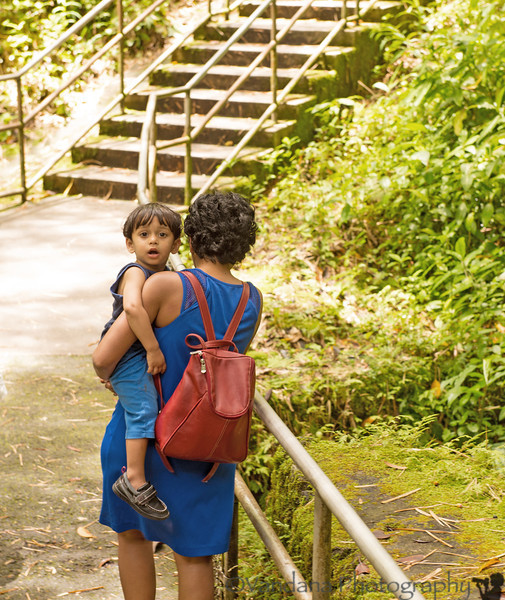 May 25, 2014 - On the way back from Akaka falls, after the enthusiastic hike in the previous shot, a tired Arjun !