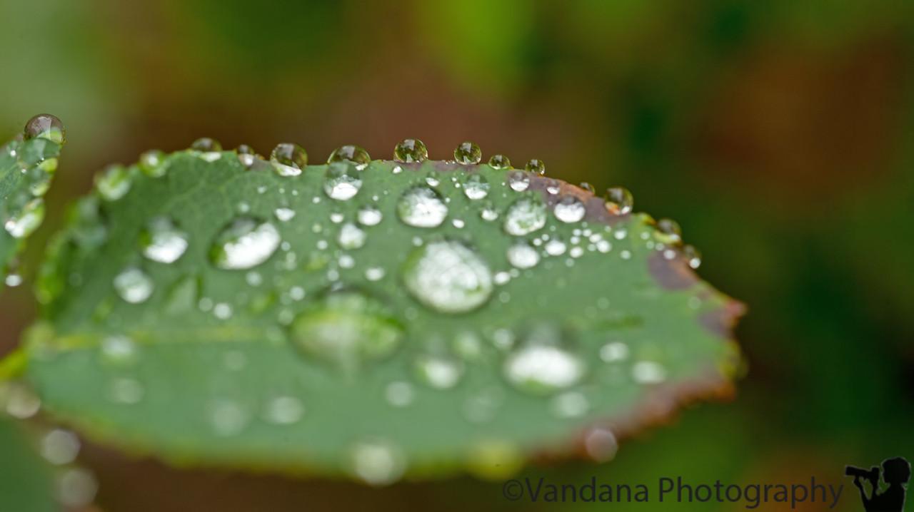 December 13, 2014 - Rain, rain