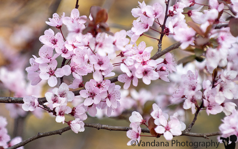 March 8, 2015 - lovely spring ! and 70F+ weather !