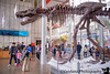 December 16, 2015 - With the Tyrannosaurus Rex At California Academy of Science, San Francisco<br /> <br /> Such fun ! Especially, since after reading the National Geographic book of Dinosaurs cover to cover more than a hundred times, we know all about the dinos, what each one ate, which period - Triassic, Jurassic or Cretaceous they came from, what was special about each one and more..., little Dino expert !