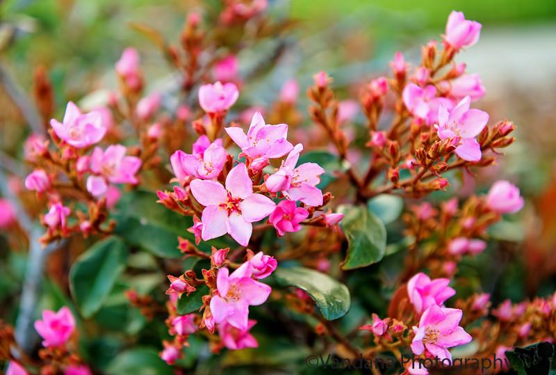 February 27, 2015 - Spring blossoms