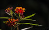 May 30, 2015 - little flowers..<br /> <br /> Arjun getting better now, fevers down a bit..