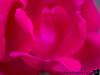 May 7, 2015 - Pink